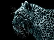 Leopard Deep Scan Backgrounds