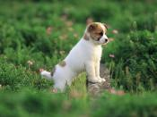 Lovable Puppy in Garden Backgrounds