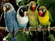 Love Parrots In Branch Backgrounds