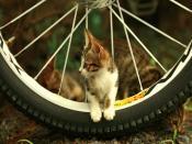 Loveable Kitten Backgrounds