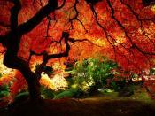Maple Orange Tree Backgrounds