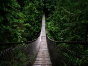Narrow Wooden Bridge Backgrounds