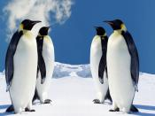 Penguins Meet In Winter Backgrounds
