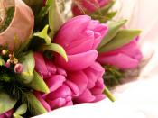 Pink Flowers Gift Backgrounds
