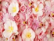 Pink Orchids Backgrounds