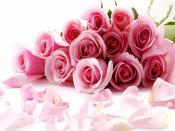 Pink Roses Flowers Backgrounds
