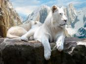 Polar Lion Backgrounds