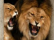 Roaring Lions Backgrounds