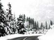 Snow Fall In Trees Backgrounds