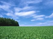 Summer Country Field Backgrounds