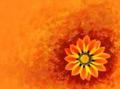 Sunflower orange Backgrounds