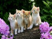 Sweet Kitten Backgrounds