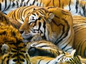 Tigers Group Meet Backgrounds
