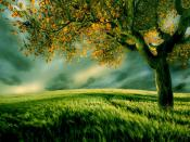 Tree In Green Field Middle Backgrounds