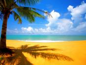 Tree Shelter In Sea Shore Backgrounds