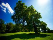 Tree Sun Shade Backgrounds