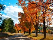 Tress Along Road Path Backgrounds