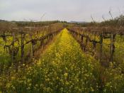 Vineyard Road Backgrounds